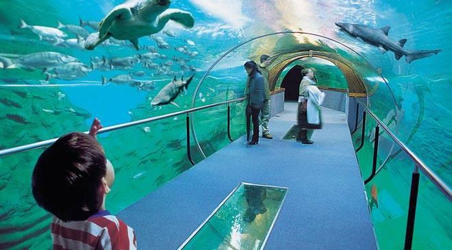 Entradas aquarium donostia san sebasti n - Aquarium donosti precio ...