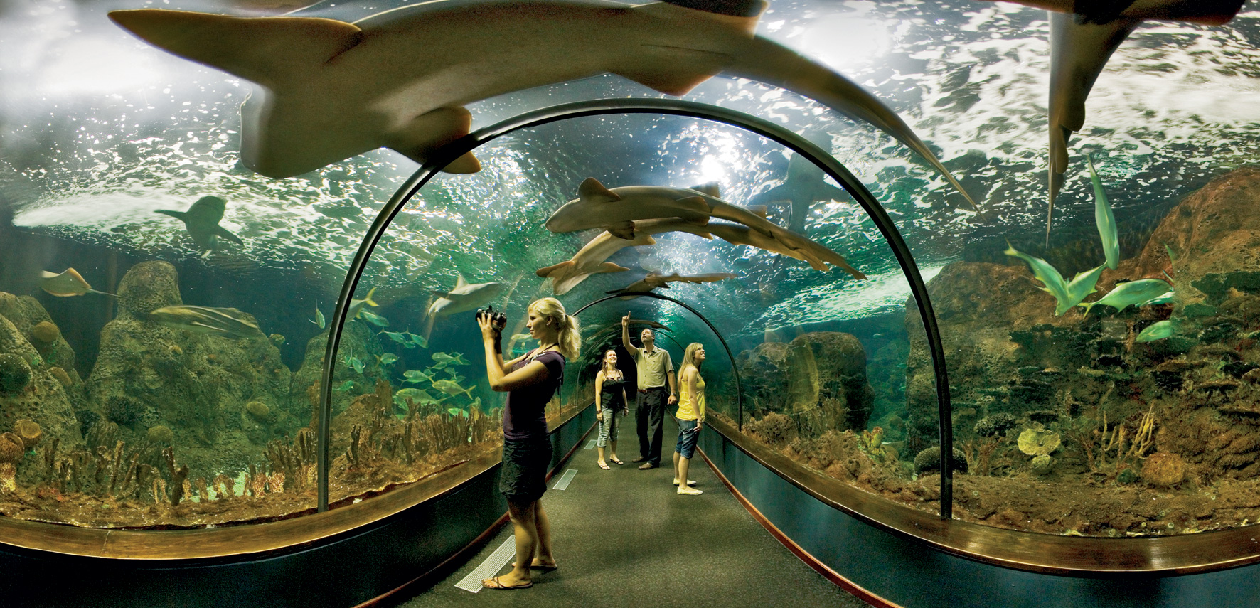 Entradas loro parque for Precio entrada aquarium
